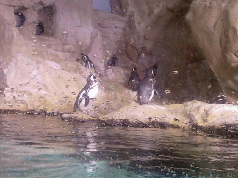 Acquario GE Pinguini