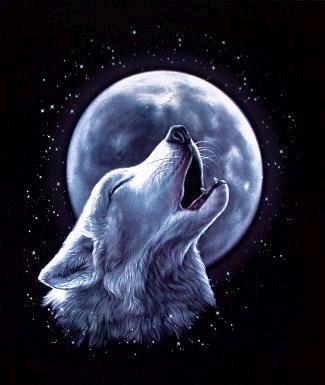 Lupo bianco che ulula alla luna *_*