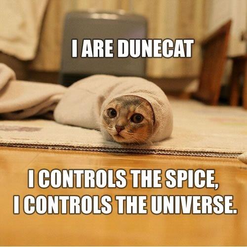 Dune Cat. Simpatica foto trovata per la rete