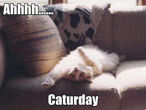 ahhhh caturday