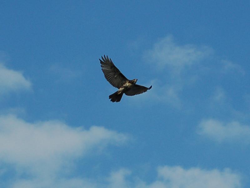 Wings Of Serenity