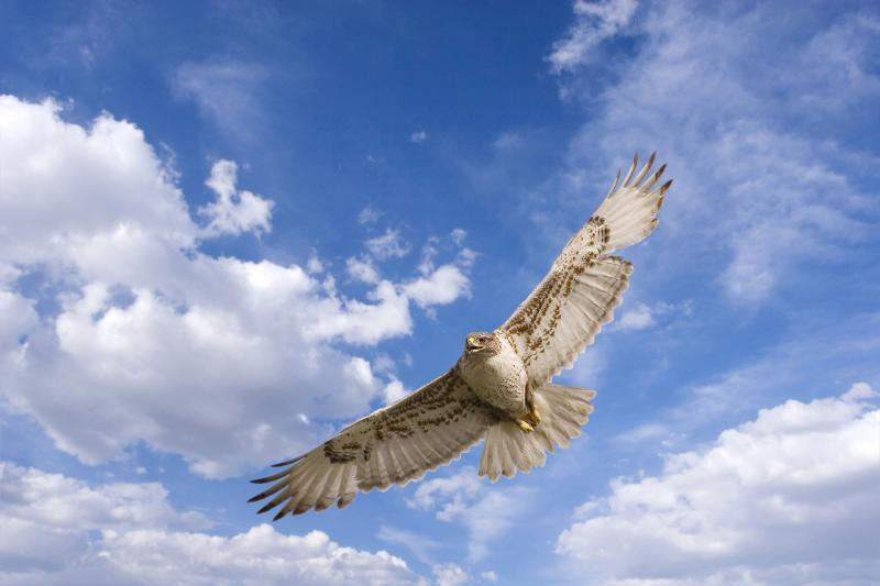 You're flying on wings of serenity.