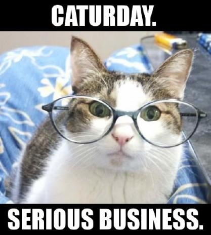 caturday: serious business