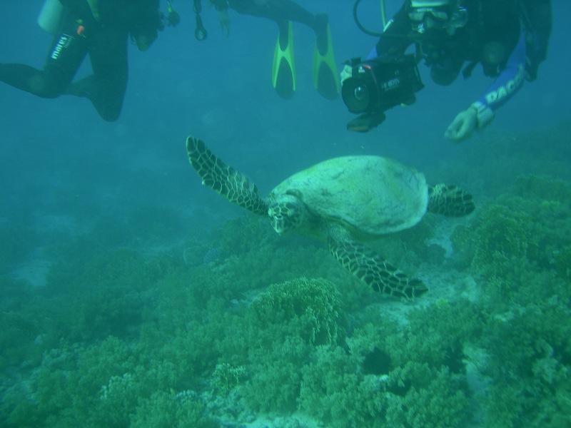 La tartaruga!!Sharm '08