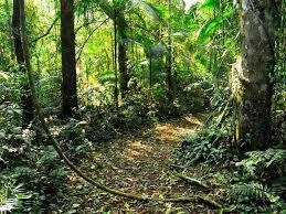 selva.jpg