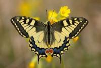 Il battito d'ali della farfalla
